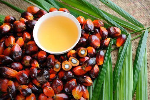 Cinq (05) bienfaits de l'huile de Palme