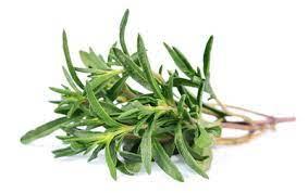 Les Vertus du Thym, une Plante qui Devrait Sortir de la Cuisine.